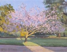 Blossom tree, Grove-Park  -  6x8