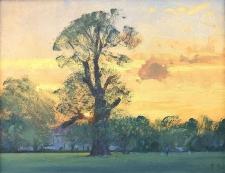 Summer evening, Carshalton Park  -  8x10